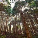相続財産の評価方法④「山林の評価のポイント」|八王子・多摩の相続なら