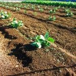 相続財産の特例➀農業相続人が農地等を相続した場合の納税猶予の特例|八王子・多摩の相続なら