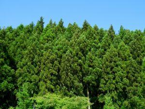相続財産の特例➂山林を相続した場合の納税猶予の特例|八王子・多摩の相続なら