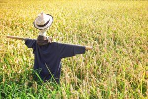 農地を相続する際に注意すること【相続税の納税猶予】