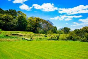 農地を相続する際に注意すること【手続きや評価税方法】